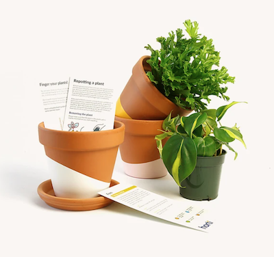 60 Horti plant subscription box
